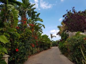 Растительность в Сиам Парке Тенерифе